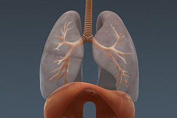 Diaphragme