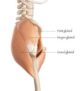 tendinopathie et osteopathie